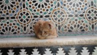 Note: this one is long. If you're not up for a long one, I've added cute cat photos from Morocco. Enjoy. Sitting in a pleasant little organic cafe at Charles...