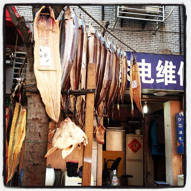 I was starting to feel like my neighbours, the dried, salted fish and flayed pig heads.